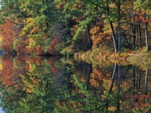Postal: El reflejo del otoño
