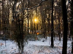 Postal: El sol en la arboleda
