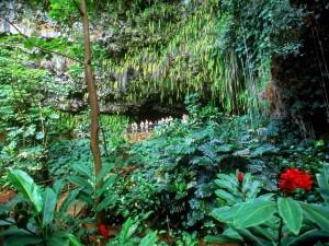 Postal: Visita a Fern Grotto, Kauai, Hawaii