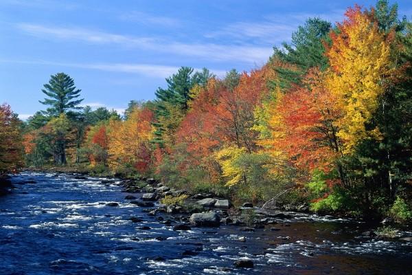Río con árboles otoñales