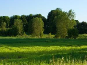Postal: Árboles verdes sobre la hierba verde