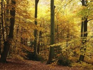 Postal: Bosque con árboles otoñales