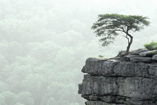 Árbol en las rocas del precipicio