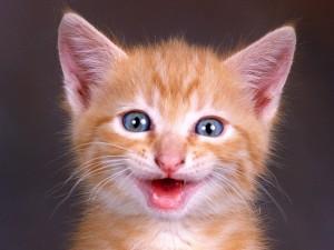Gatito feliz