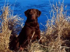 Postal: Perro cerca del agua