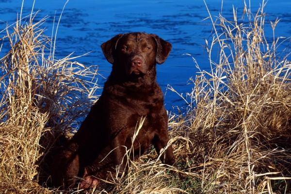Perro cerca del agua