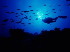 Buceo en las Bahamas