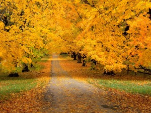 Postal: Carretera cubierta con hojas otoñales