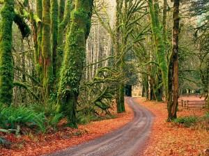 Postal: Carretera en un bosque