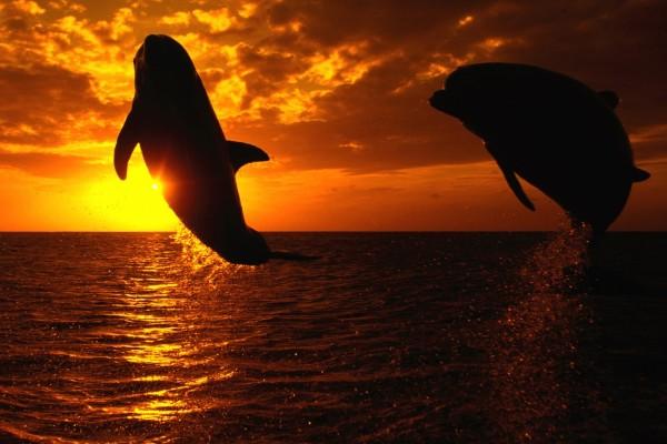 Dos delfines saltando al atardecer