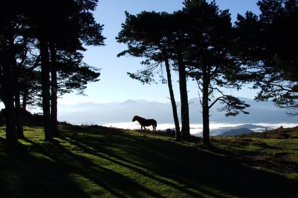 Asturcón en la montaña (caballo asturiano)