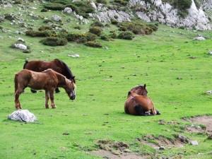 Caballos en Asturias