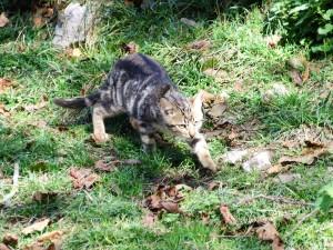 Postal: Gato hacia su objetivo