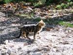 Gatito maullando en la luz del sol