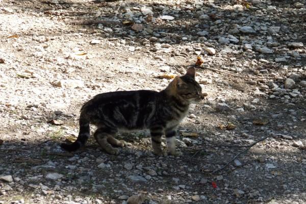 Gatito en un pueblo asturiano