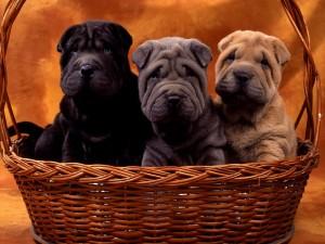 Tres perros en la cesta