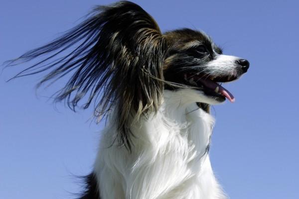 Perro con el pelo largo