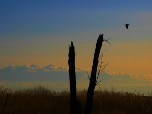 Troncos de árbol roto y ave en el cielo