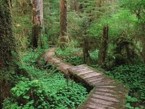 Postal: Camino de madera