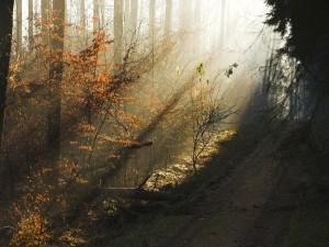 Postal: Luz en el bosque