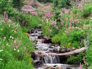 Postal: Cascada en primavera