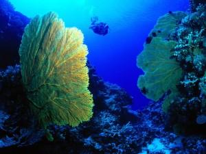 Buceo en el mar