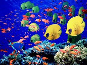Varios tipos de peces tropicales