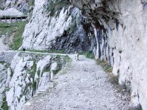 Postal: Rebecos en el desfiladero del Cares, Asturias