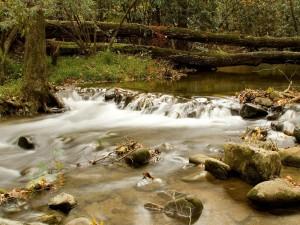 Postal: Árboles caídos en el río