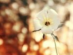 Flor con pétalos blancos