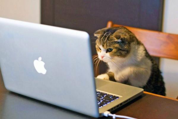 Gatito mirando la computadora