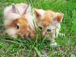Un gato y un conejo en la hierba
