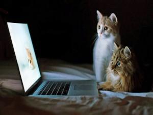 Dos gatos atentos mirando la computadora