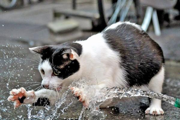 Un gato jugando con un chorro de agua