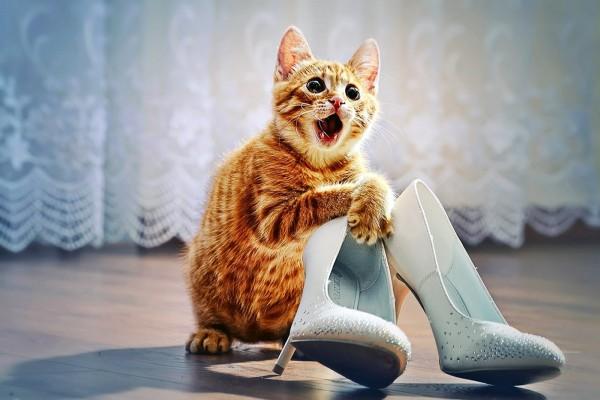 Gatito asustado con un par de zapatos