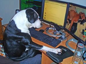 Un perro viendo fotos en la computadora