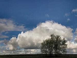 Postal: Gran nube blanca y un árbol