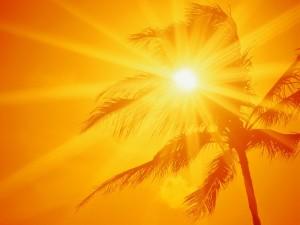 Postal: El sol, la palmera y un cielo naranja