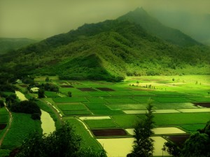 Campos de cultivo verdes