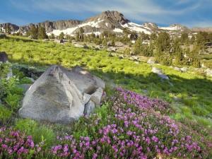 Florecillas moradas cerca de la montaña