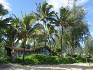Postal: Casa entre palmeras