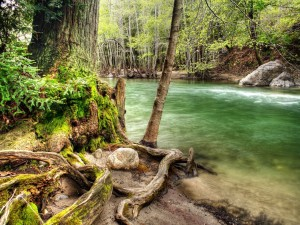 Postal: Las raíces cerca del río