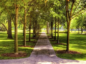 Postal: Camino en el parque