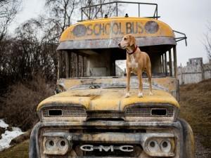 Un perro sobre un viejo autobús escolar