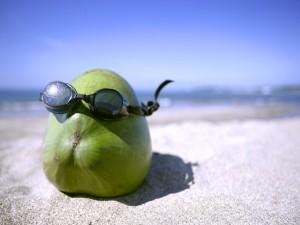 Un coco en la playa