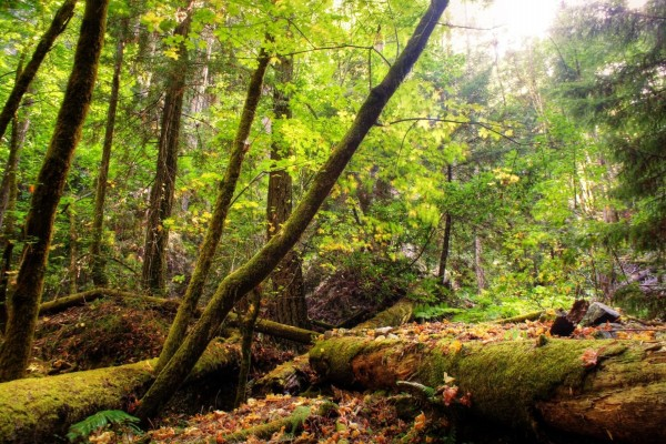 En el interior de un bosque verde en otoño