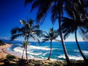 Vista del mar desde la costa con palmeras