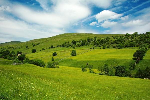 Prado verde en un lugar solitario