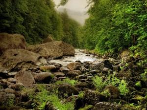 Pequeño río entre grandes piedras