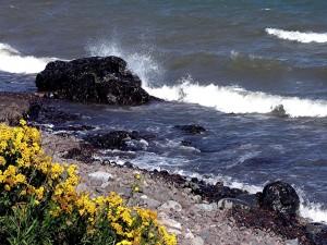 Postal: Flores amarillas en la costa